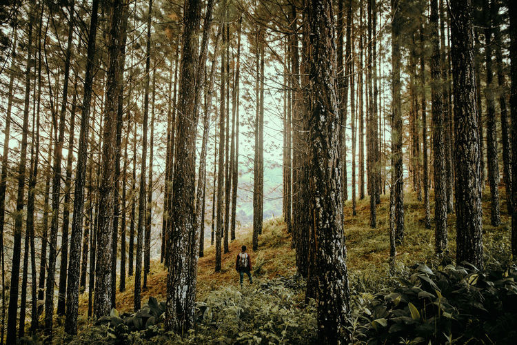 Into the Woods Beauty In Nature Day Forest Into The Wild Into The Woods Landscape_Collection Nature Outdoor Photography Outdoors Pine Tree Scenics Tree Tree Trunk WoodLand Sommergefühle