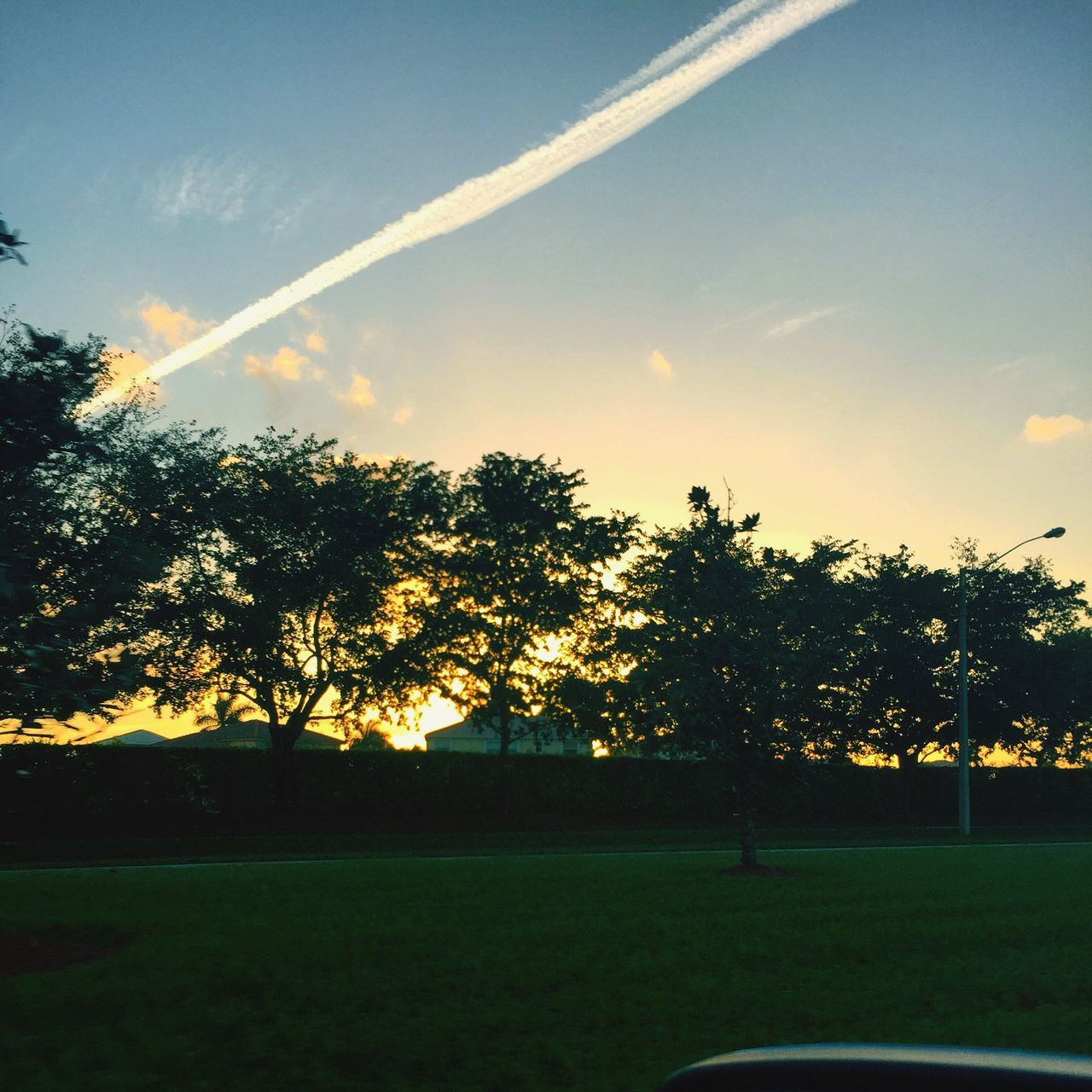 tree, nature, beauty in nature, grass, landscape, no people, growth, sunset, tranquility, outdoors, scenics, vapor trail, sky, contrail, day