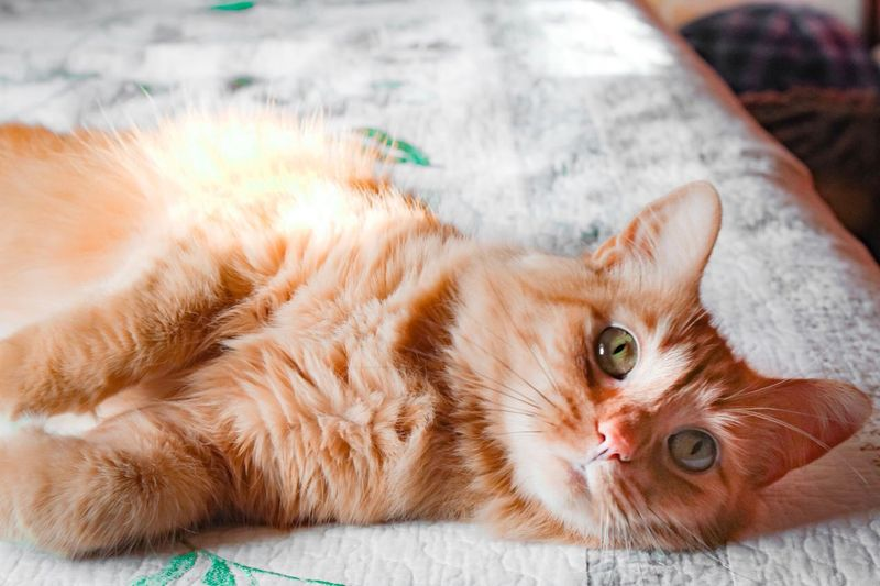 Pets Domestic Animals Domestic Cat One Animal Animal Themes Mammal Lying Down Feline Looking At Camera Ginger Cat No People Close-up Portrait Indoors  Day Kitty Cat Animal EyeEmNewHere Kitten