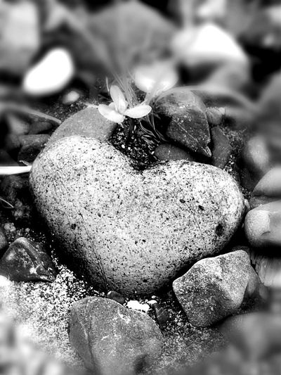 @richardold I give you my heart Love Rocks Found In Nature Natural Wonders Love My Husband Love Nature Close-up