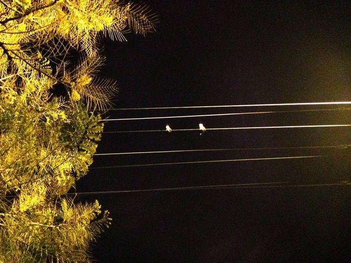 Birds At Night Birds On Cable Night
