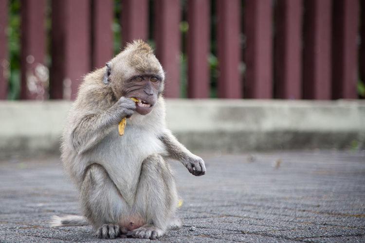 Primate One