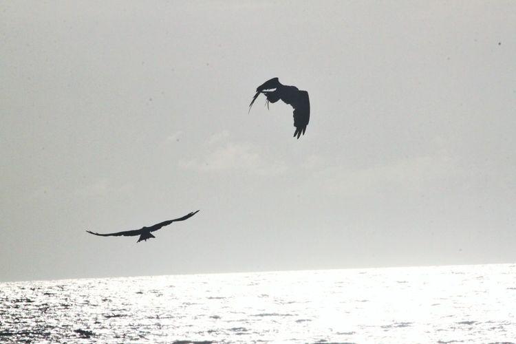 Silhouette bird flying over sea against clear sky