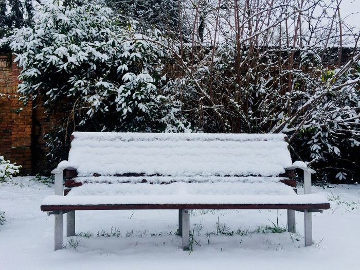 bench in the snow Snow Cold Temperature Winter Plant Bench Nature Seat Beauty In Nature Park Bench