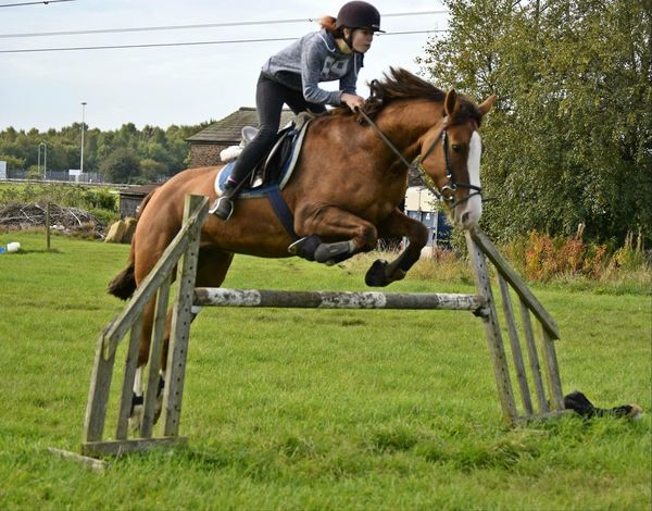 Photographed my friend and her beloved horse, Tequila. Horse Outdoors Field Grass Showjumping