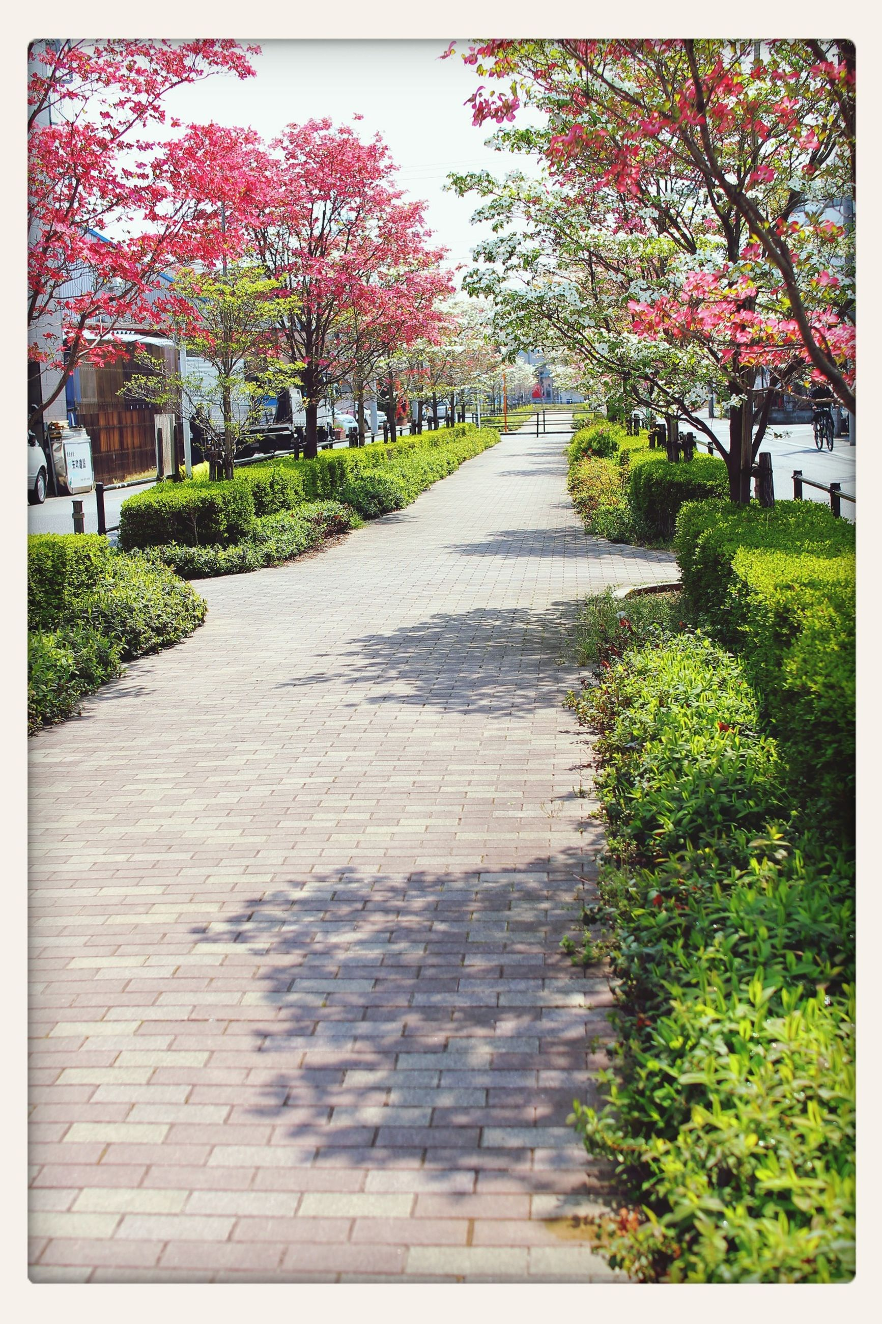 the way forward, transfer print, tree, building exterior, built structure, architecture, flower, footpath, growth, auto post production filter, cobblestone, diminishing perspective, plant, walkway, pathway, day, narrow, sunlight, street, formal garden