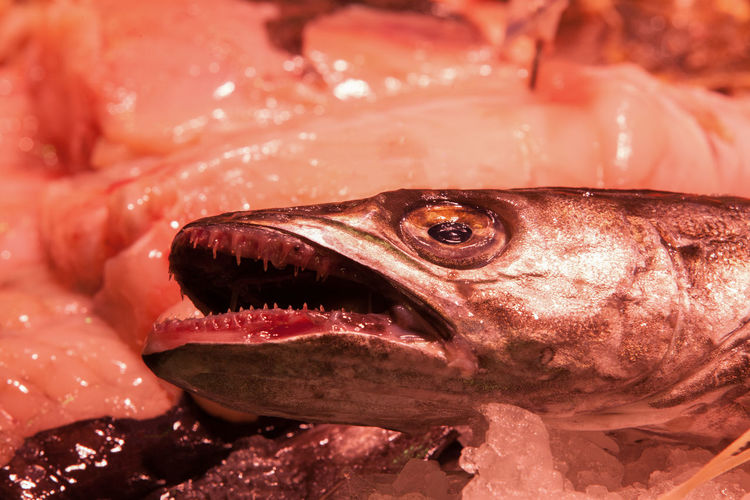 Rain Fish Seafood Marketplace Dead Teeth Vertebrate Close-up Animal Body Part Food And Drink For Sale Food Freshness Raw Food Wellbeing Market Animal Teeth Mouth Open Marine Fishing Industry Animal Boqueria