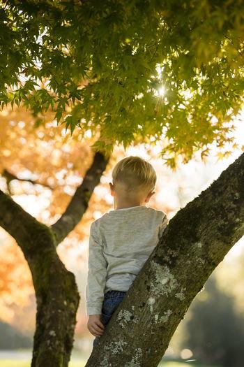 Rear view of boy on tree trunk