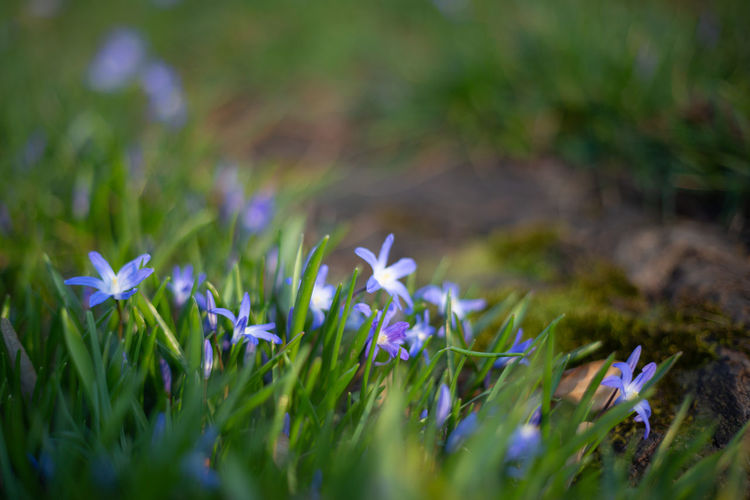 Plant Growth Flower Flowering Plant Field Land Vulnerability  Selective Focus Freshness Fragility Nature Beauty In Nature Green Color Grass Close-up No People Day Tranquility Outdoors Petal Flower Head Purple