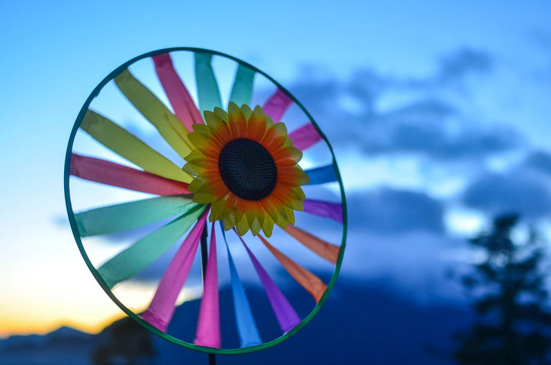 Low angle view of multi colored flower against sky