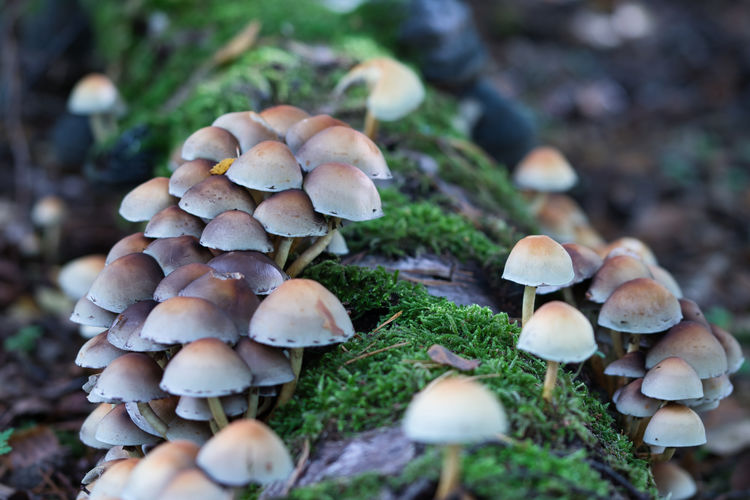 Close-up of mushrooms growing on field