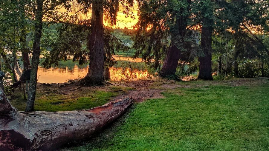 Poulsbo Tree Tree Trunk Nature Forest Beauty In Nature Outdoors Scenics Landscape Tranquility No People Green Color Sunset Sunlight Grass Public Park