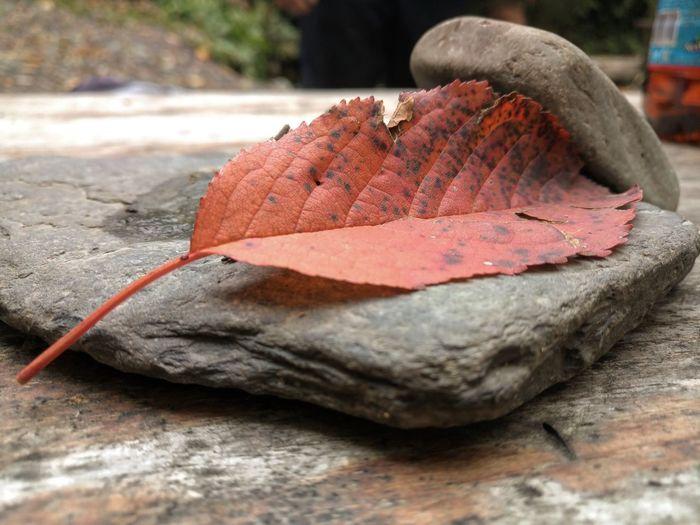 Close-up of autumn leaf