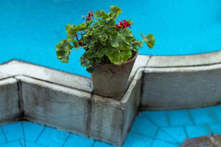 High angle view of potted plant by swimming pool