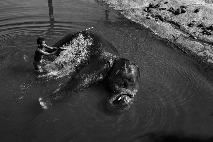 Adult Animal Themes Animal Wildlife Animals In The Wild Bath Caretaker Day Elephant Indian Elephant Kanyakumari Mammal Nature One Animal One Person Outdoors People Thirparappu Falls Water Welcome To Black The Photojournalist - 2017 EyeEm Awards Pet Portraits