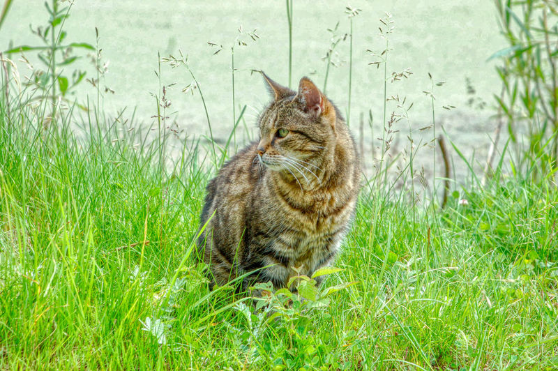 Cat sitting on grass in field