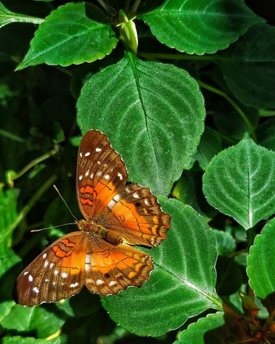 Close-up of butterfly on leaves