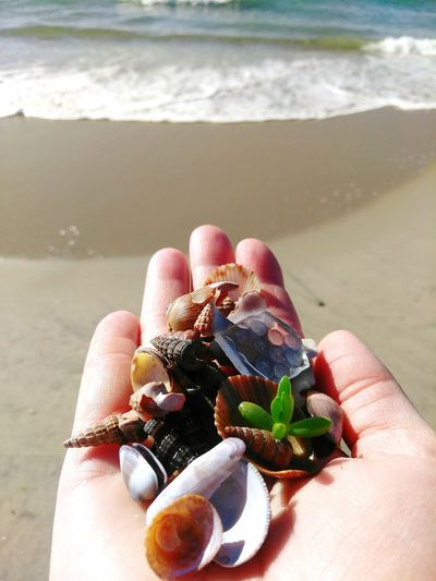 Found on the Beach Found Collection Beachphotography Beach Photography Beach Life Green Green Color Vacation Sandy Beach Sunny Sunny Day Treasure Hand POV Human Hand Water Sea Beach Sand Holding Sunlight Palm Wave Surf Handful Personal Perspective Tide Seascape Coast Shore