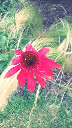Flowerporn Tulln Summertime Red
