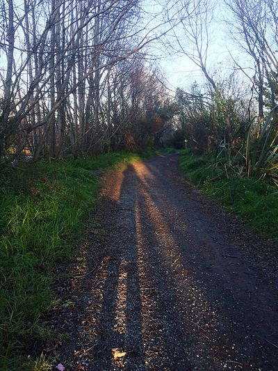 Early winter morning stroll Winter Walking Sunlight And Shadow Path Nature At Your Doorstep