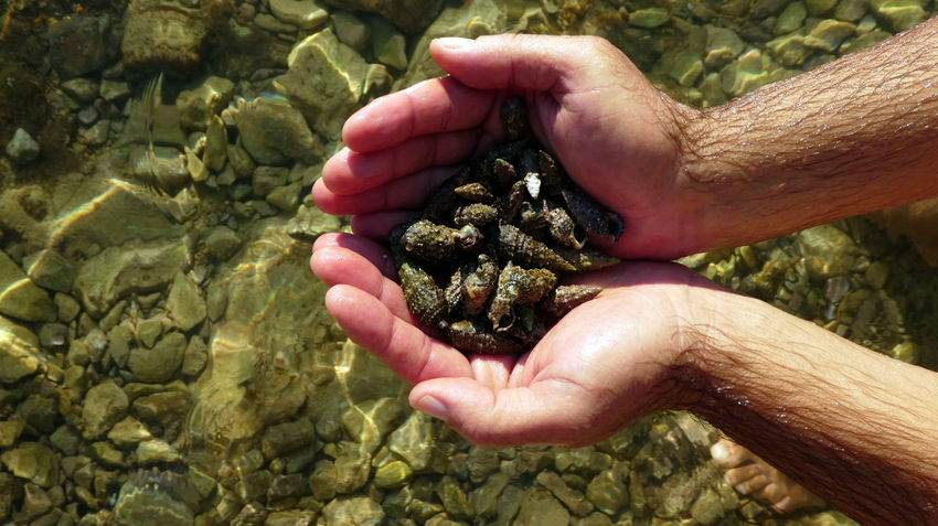 Croatia EyeEm Nature Lover Mediterranean  Travel Beach Beachlife Beauty In Nature Clear Water Close-up Coast Day Discovery Eyeem Travel Hands Cupped Handsinframe High Angle View Holding Hrvatska Nature One Person Outdoors Sea Seashells Shells Water