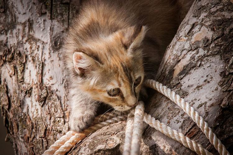 Close-Up Of Kitten On Tree Trunk