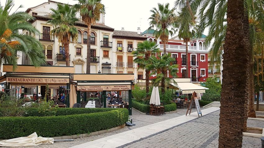 Granada Spain🇪🇸 Andalusia Square Travel Outdoors Houses Sightseeing Day City Town Life Town Touristy Site Plaza Travel Photography Architecture Colorful Palm Tree Plaza Romanilla