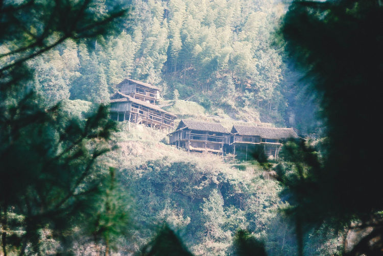 Houses Architecture Beauty In Nature Built Structure China Day Forest Growth Low Angle View Nature No People Outdoors Tourism Tree View From Above