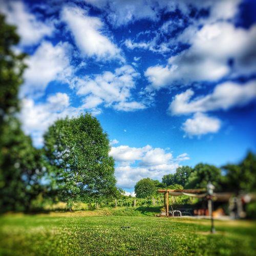 Nice day in the Garden - Field Sky Saint Martin De Riberac France Vinyard Vinyardview Vinyards