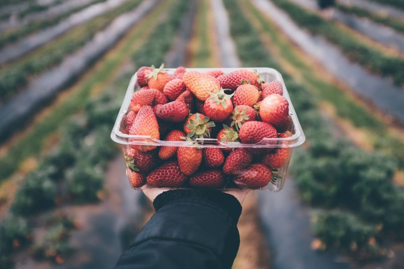 Cropped hand holding strawberries in box outdoors