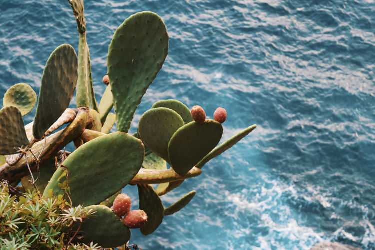 Close-up of succulent plant on sea