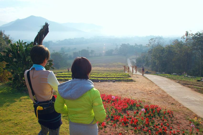 Beautiful nature in the morning at Pai Maehongson Thailand. Winter season. Countryside Maehongson Thailand Winter Environment Amazing Travel Weather Landscape View Mountain Hill Mist Morning Misty Morning Light Sunlight Tree Sky Beautiful Nature Fog Holiday Outdoor Season