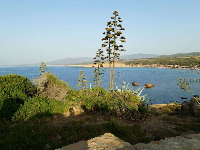 landscape sea Nature Sea Growth Tranquility Tranquil Scene Water Plant Beauty In Nature Landscape Scenics Flower No People Outdoors Day Uncultivated Sky Beach Tree Horizon Over Water Grass