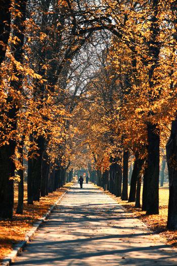 Alley Autumn
