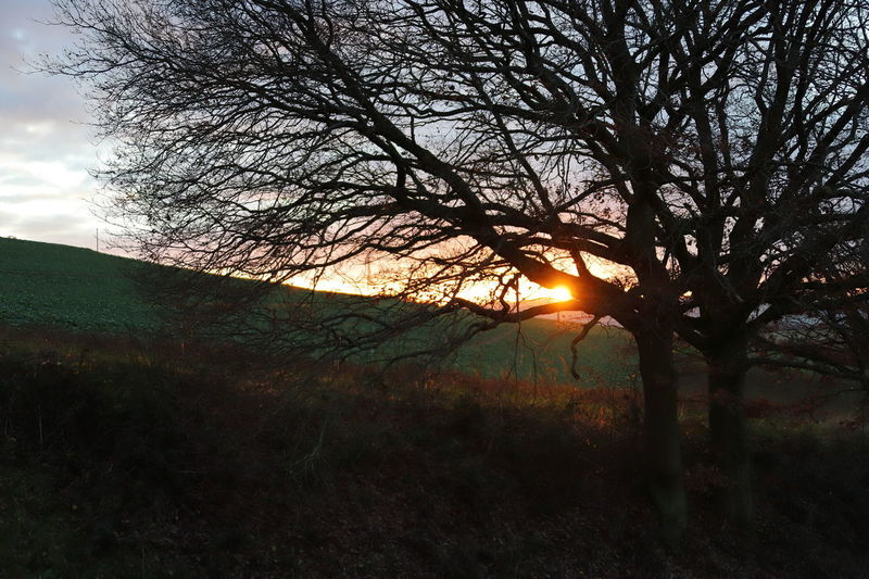 View of bare trees at sunset