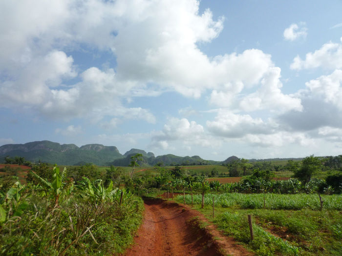 Dirt track in Vinales Cuba Cuba Road Viñales Agriculture Beauty In Nature Cloud - Sky Countryside Day Dirt Track Field Grass Growth Landscape Mountain Nature No People Outdoors Rural Scene Scenics Sky The Way Forward Tranquil Scene Tranquility