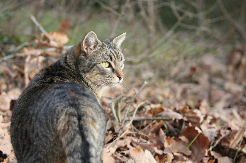 Nature Photography Nature Tiger Cat Cat Kitty