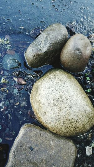 Rocks Rocks And Water Water Plants 🌱 Helloworld Goodnightworld Plants Plant Bark Outsideofmyhouse