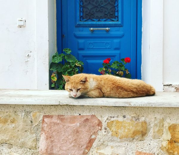 Cat in front of a blue door Stone Wall Greece Idyllic Scenery Idyllic Blue Door Blue Relaxed Moments Cat Animal One Animal Animal Themes Mammal Vertebrate Cat Feline Relaxation Domestic Cat Wall - Building Feature Door Building Exterior Day Built Structure No People Architecture Domestic Animals Pets Entrance Domestic