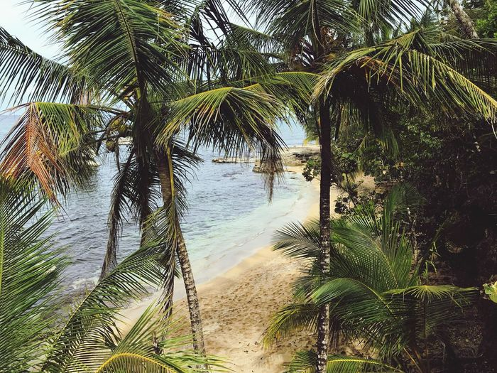 Que lindo es mi país Manzanillo Limón Costa Rica Tree Plant Beauty In Nature Water Tranquility Nature No People