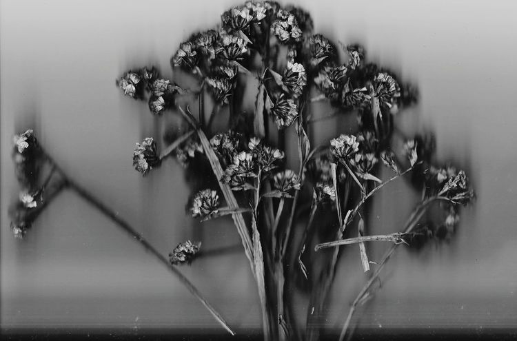 Flower Plant Nature No People Tranquil Scene Black And White Photography Mexicanphotographer Blackandwhite Blackandwhite Photography Scanner