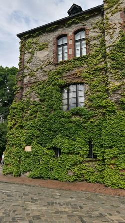 Architecture Built Structure Ivy Building Exterior House No People Window History Day Outdoors Sky Nature Architecture Green Color Tree
