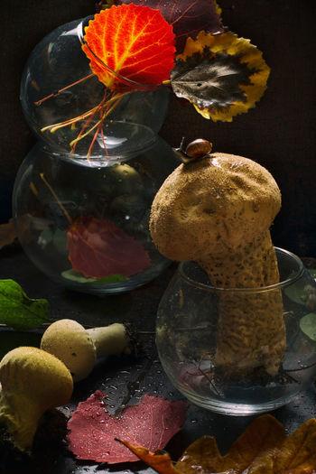Mushroom &