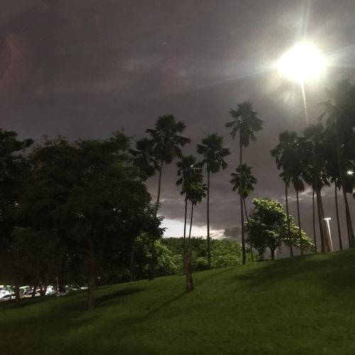 Noite no Aterro Plant Tree Palm Tree Grass Night Nature Sky Tropical Climate Outdoors No People Growth Green Color Beauty In Nature Scenics - Nature Cloud - Sky Tranquility Lighting Equipment Land Environment