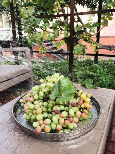 High angle view of fruits and plants in yard