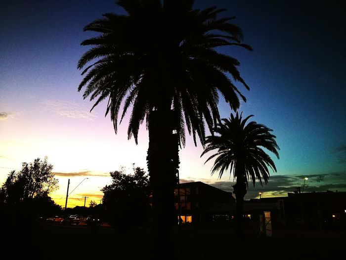 Palm Tree Tree Sunset Silhouette Sky No People Sea Night Outdoors Nature City Beauty In Nature Mordialloc Pier