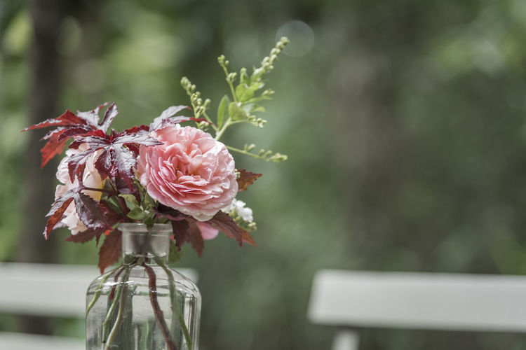 Close-up of rose bud in glass vase