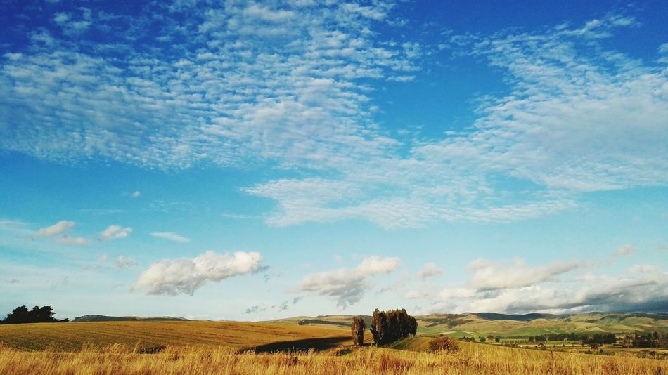 Landscapes With WhiteWall Greenserenedream The Week On EyeEm