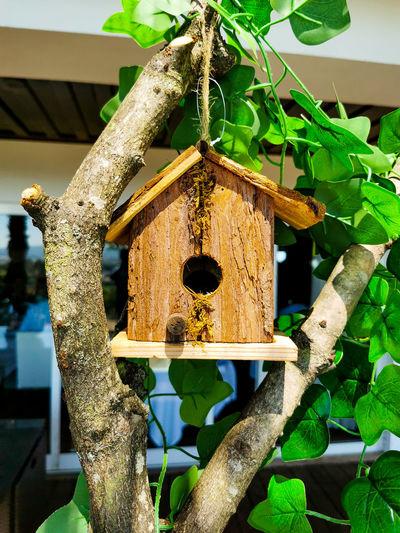Close-up of birdhouse on tree