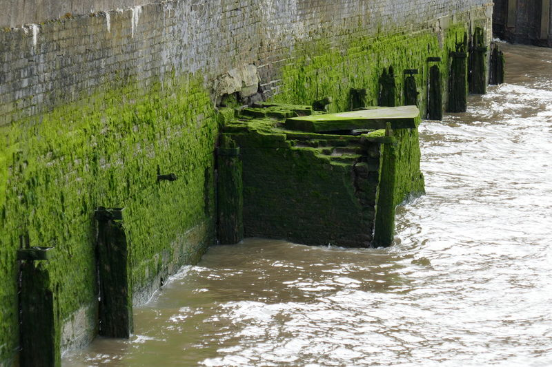 Green Color No People Growth Tranquility Nature Shadow Outdoors Day River Water Wooden Posts EyeEm LOST IN London Perspectives On Nature